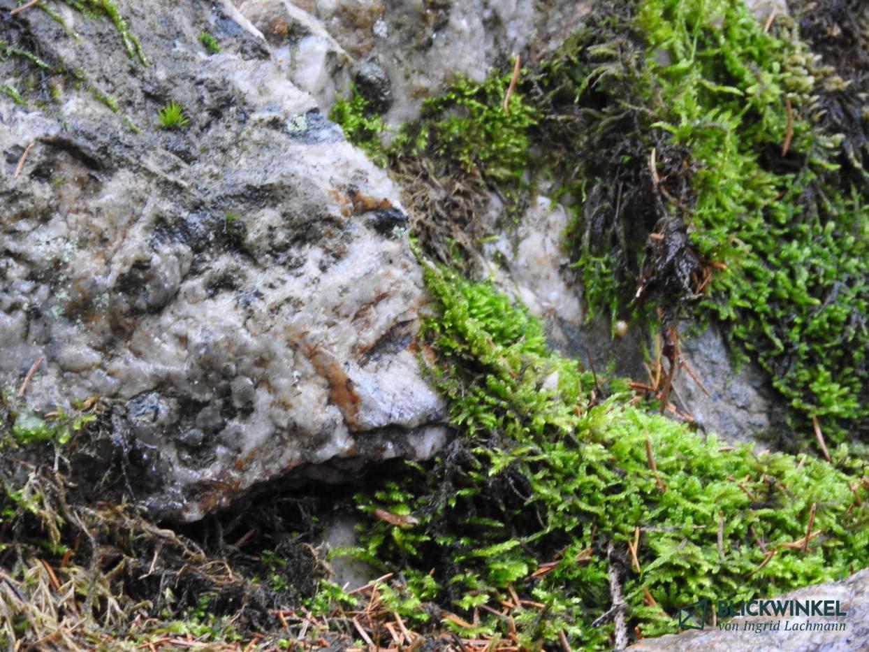 Felsgesichter entdeckt beim Waldbaden in Grünbach und Umgebung