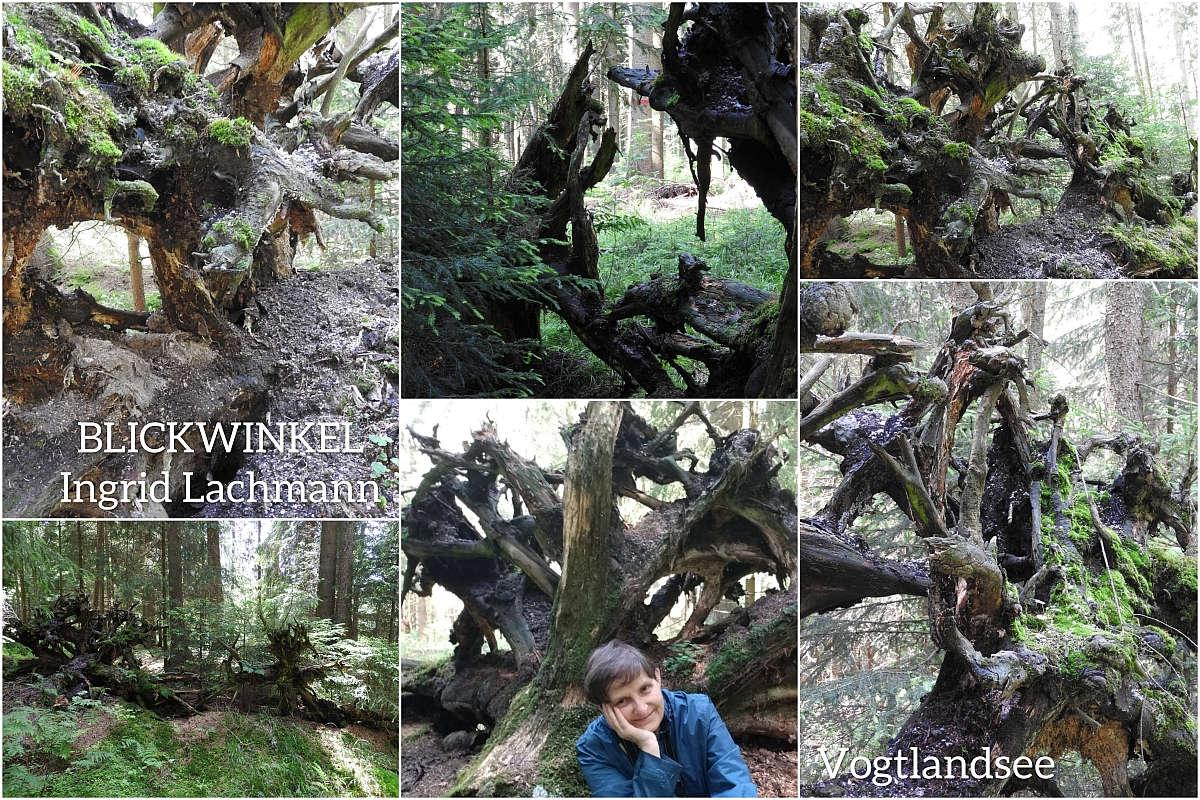 Kunstwerke der Natur am Vogtlandsee